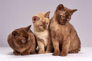 image of three kittens
