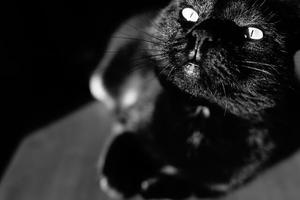 151 Halloween Cat Names For Your Mysterious Kitty