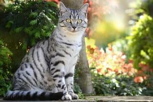 92 Japanese Cat Names For Your Kawaii Kitty