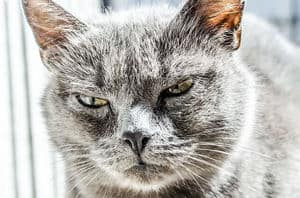 image of a pissed off feline