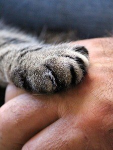 the paw of a cat in a man's hand