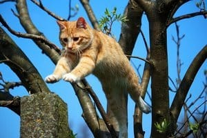 an orange cat jumps from a tree