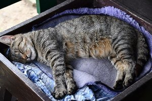 image of a kitty sleeping in a bed