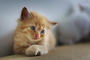 image of a feline
