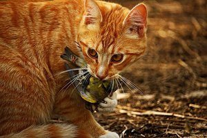 image of a feline with a dead bird in mouth