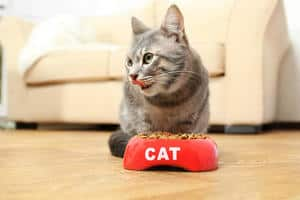 a gray cat in front of a red food bowl