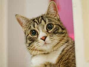 image of a shocked kitty (cats and ghosts)