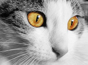 image of a feline face