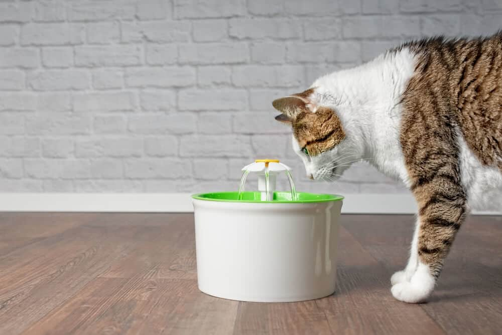 Pet Supplies Fresh Water Drinking Fountain For Cats And Small Dogs Bowl Elegant And Sturdy Package