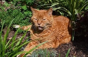 image of an old kitty outdoors