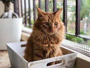 Tabby Cat Orange