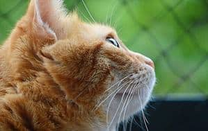 image of a feline outdoors