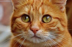Picture of confused yellow cat