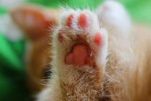 image of a cat paw