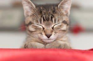image of a sad ill cat