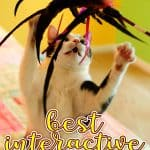 Best Interactive Cat Toys - Automatic Toys For Your Feline!