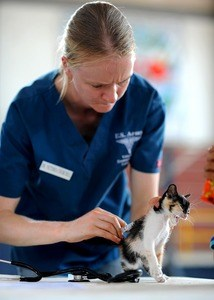 image of a cat receiving a vaccine