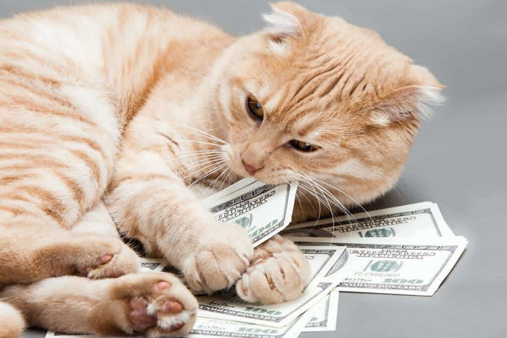 image of a feline counting money