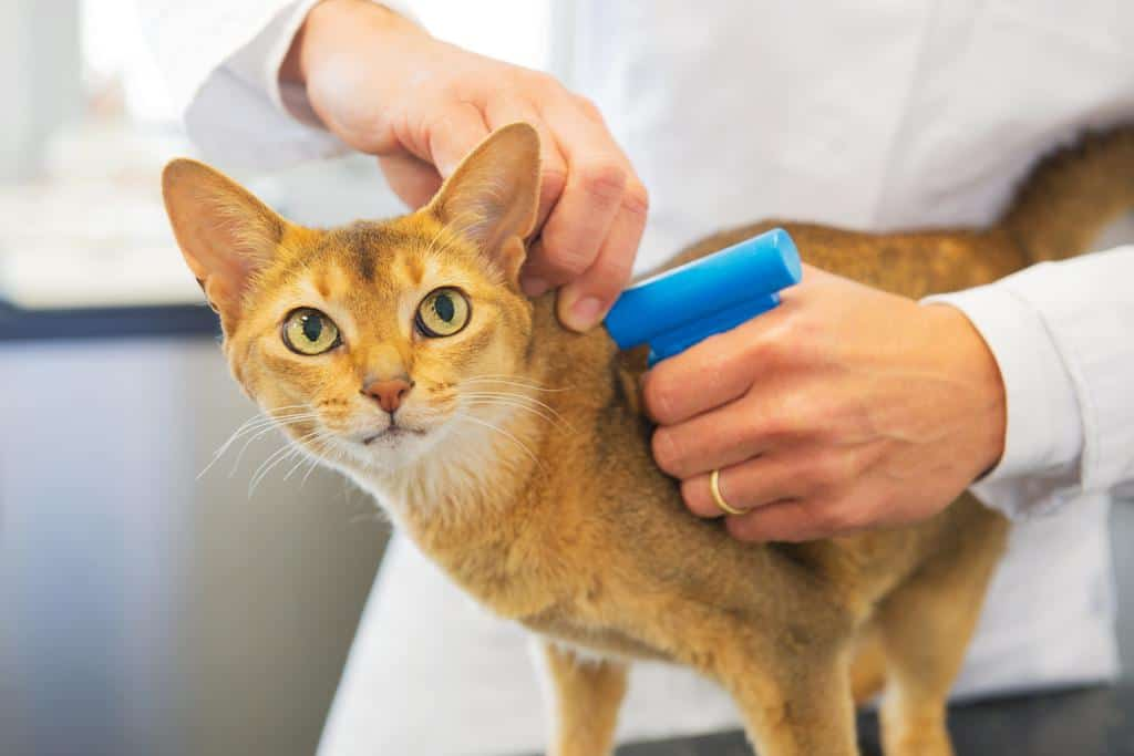 image of a cat getting microchipped