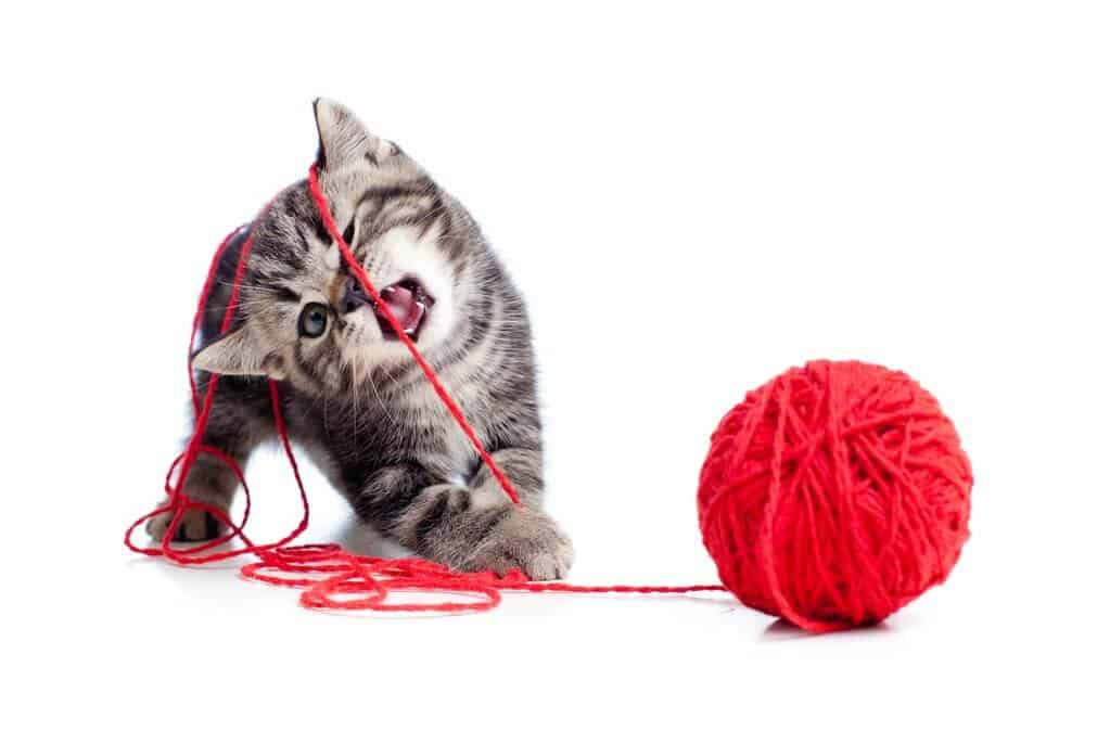 image of a kitten playing