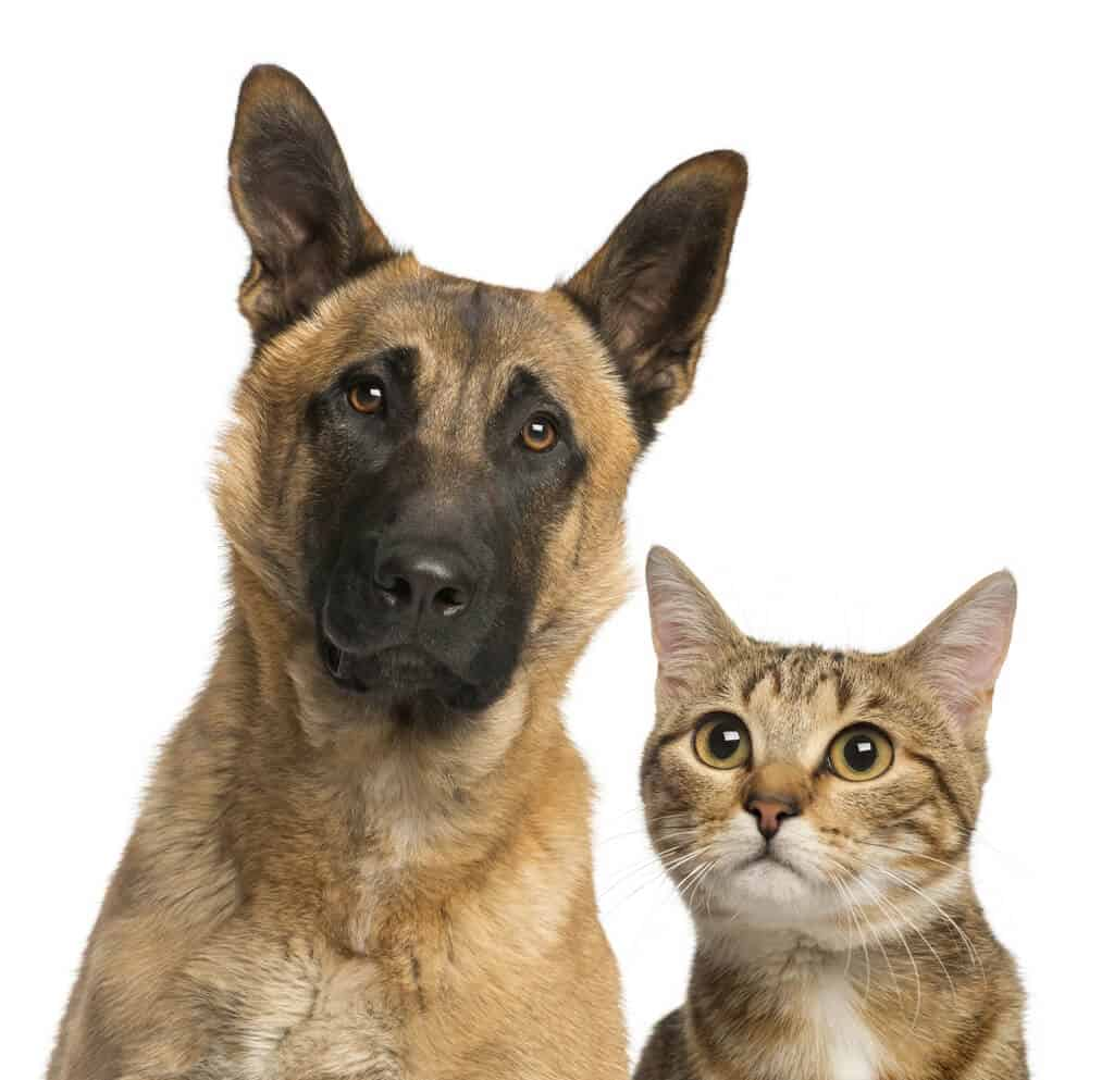 close-up of a cat and dog, isolated on white