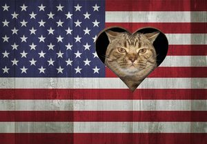 The cat looks through a hole in the US flag. This opening is in the shape of a heart.