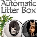 Top 7 Best Automatic Litter Box For Self Cleaning [2021 Update]